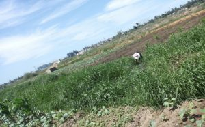vegetables-fields-maputo